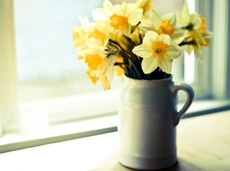 daffodils in a a milk pitcher