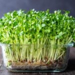 How to grow Microgreens - an easy guide to growing your own Microgreens indoors, plus 10 health benefits!