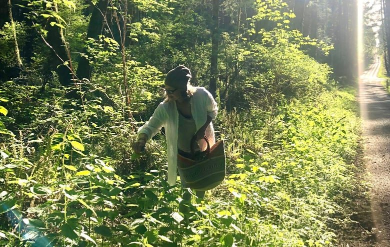 picking nettles in the wild